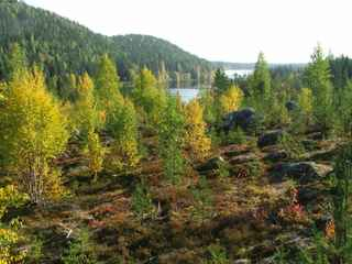 Woods and lake at Kroktrask