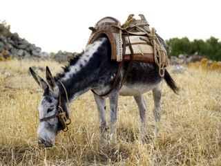 figureless donkey
